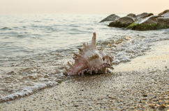 Large seashell on the background of the sea shore Stock Photos