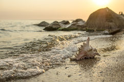 Large seashell on the background of the sea shore Royalty Free Stock Photography