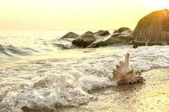 Large seashell on the background of the sea shore Royalty Free Stock Images