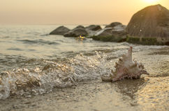 Large seashell on the background of the sea shore Stock Images