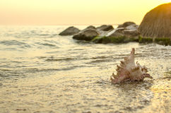 Large seashell on the background of the sea shore Royalty Free Stock Photo