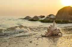 Large seashell on the background of the sea shore Royalty Free Stock Photos