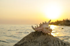 Large seashell on the background of the sea shore Stock Photo
