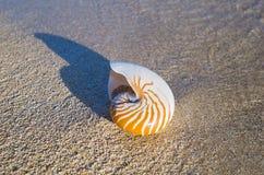 Large Seashell on beach Stock Photos