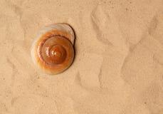 Large seashell on the sand Royalty Free Stock Image
