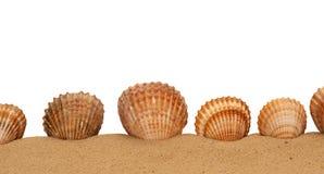 Large seashell on the sand Stock Photos