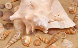 Large seashell on the sand Stock Images