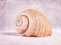A large seashell with scratches in a vintage style. One big in the middle stock images