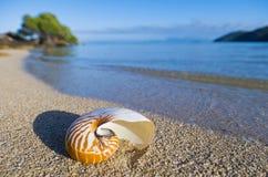 Large Seashell Stock Photos