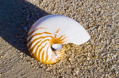Large Seashell Royalty Free Stock Photos