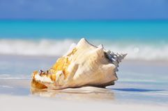 A large seashell on white sand on the shore of the emerald sea. royalty free stock images