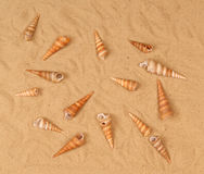 Large Seashells On The Sand Stock Photography