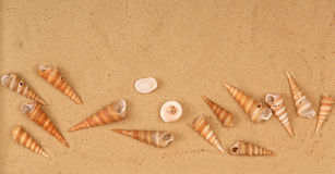 Large seashells on the sand Royalty Free Stock Photos