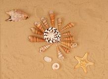 Large seashells on the sand Royalty Free Stock Photos