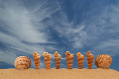 Large seashells on the sand Stock Photo