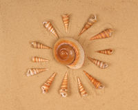 Large seashells on the sand Stock Images