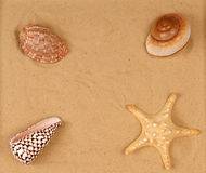 Large seashells on the sand Stock Image