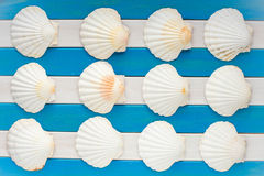 Large seashells on wooden marine background. Royalty Free Stock Photography