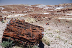 Large section of petrified wood at Petrified Forest National Par Stock Photo