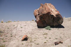 Large section of petrified wood at Petrified Forest National Par Royalty Free Stock Photos