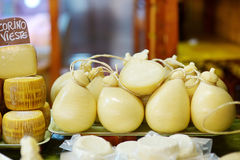 Large selection of cheeses on italian farmer market Stock Image