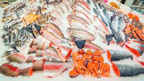 A large selection of fresh fish lying in the ice on the counter of the supermarket. Text in Russian: salmon, steak, piece, carp, Sylvia, pollock, cod, Atlantic royalty free stock image