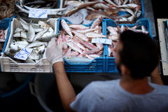 Large selection of seafood Stock Photos