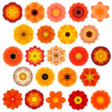 Large Selection of Various Concentric Mandala Flowers Isolated on White Stock Photography