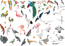 Large set of color isolated birds Stock Photos