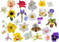 Large set of isolated flowers Stock Photography