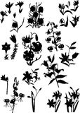 Large set of lily silhouettes Royalty Free Stock Images