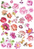 Large set of pink flowers Royalty Free Stock Photography