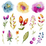 A large set of watercolor flowers and plants stock illustration