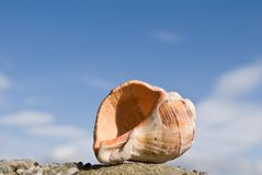 Large shell Stock Photo