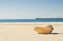 Large shell and beach Stock Photos