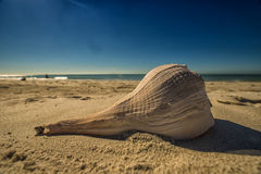 Large shell on beach Royalty Free Stock Photos