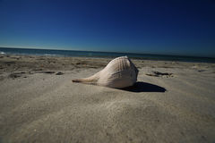 Large shell on beach. Large shell on the beach with the ocean in the background. Dark blue skies and light sandy beach Stock Images