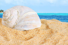Large shell on beach sand of the Caribbean Royalty Free Stock Photo