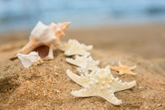 Large shell and starfish Stock Photos