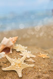 Large shell and starfish Royalty Free Stock Photography