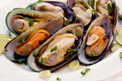 Large shells in white wine Royalty Free Stock Photography