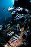 Large shoal of Tropical Fish Stock Image