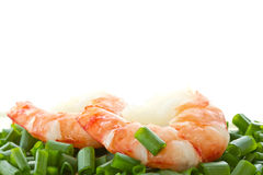 Large shrimp Stock Image