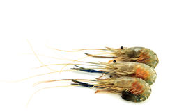Large shrimp Royalty Free Stock Photos
