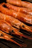 Large shrimp focus on head row seafood delicacies on iron grill closeup culinary background prepare dishes asia stock photography