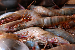 Large shrimps Royalty Free Stock Images