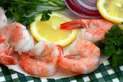 Large shrimps Royalty Free Stock Photo