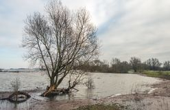 Large shrub in the water of the river. Large bare willow shrub in the water of the river next to the bank. It is a cloudy day in the beginning of the winter royalty free stock photos