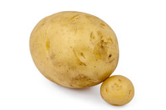 Potato. Large size potato on white background with a smaller one to to compare the sizes Stock Images