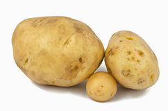 Potato. Large size potatoes on white background with a smaller one in between, to compare the sizes Royalty Free Stock Photo